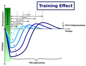 Fatigue et récupération en fonction du training effect