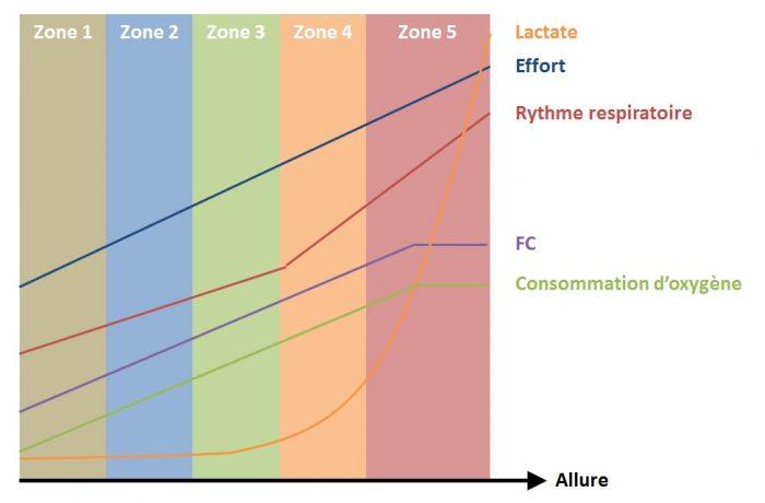 Graphe zones cardio